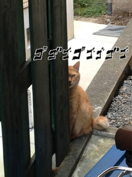 猫2.cng.jpg